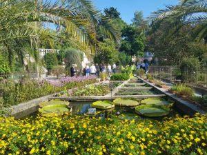 Orto botanico di Padova, piante acquatiche